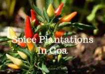 Spice Plantations in Goa